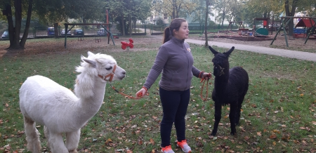 Spotkanie  Żeglarzy z Alpakami